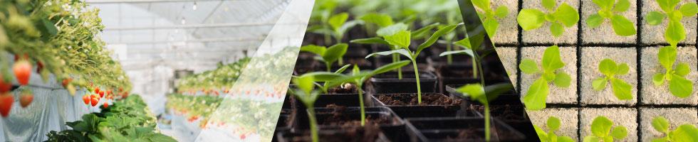 IT農業支援ソリューション